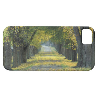 USA, Kentucky, Louisville. Tree-lined road in iPhone 5 Case