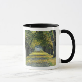 USA, Kentucky, Louisville. Tree-lined road in Mug