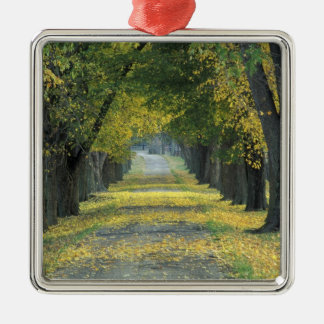 USA, Kentucky, Louisville. Tree-lined road in Silver-Colored Square Decoration