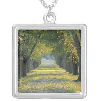 USA, Kentucky, Louisville. Tree-lined road in Silver Plated Necklace
