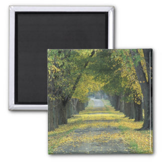 USA, Kentucky, Louisville. Tree-lined road in Square Magnet