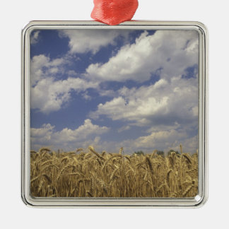 USA, Kentucky, Louisville. Wheat crop and Christmas Ornament