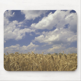 USA, Kentucky, Louisville. Wheat crop and Mouse Mat