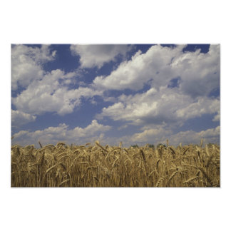 USA, Kentucky, Louisville. Wheat crop and Poster