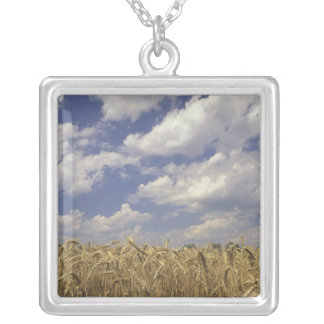 USA, Kentucky, Louisville. Wheat crop and Silver Plated Necklace