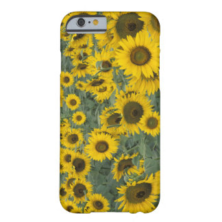 USA, Kentucky Pattern in field of cultivated Barely There iPhone 6 Case