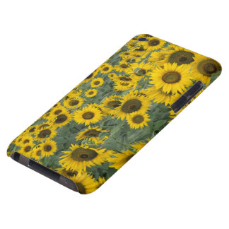 USA, Kentucky Pattern in field of cultivated Barely There iPod Case