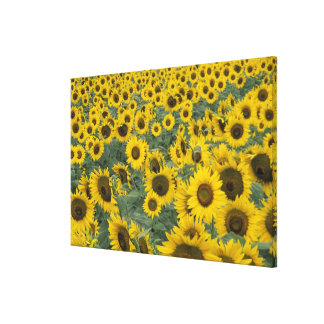 USA, Kentucky Pattern in field of cultivated Stretched Canvas Print