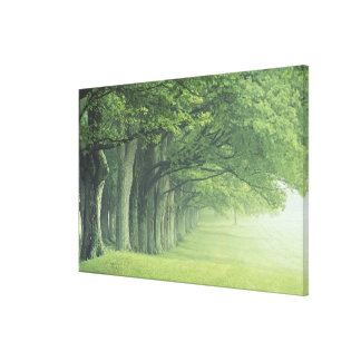 USA, Kentucky. Row of trees in spring Canvas Print