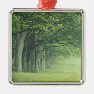 USA, Kentucky. Row of trees in spring Christmas Ornament