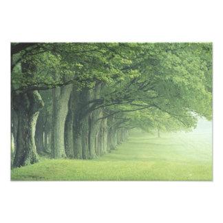 USA, Kentucky. Row of trees in spring Photo Print
