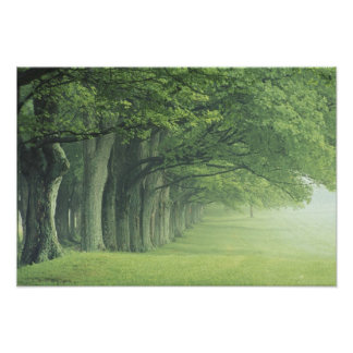 USA, Kentucky. Row of trees in spring Poster