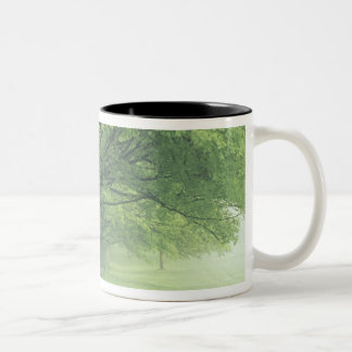 USA, Kentucky. Row of trees in spring Two-Tone Coffee Mug