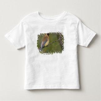 USA, Lake Sammamish, Washington. Cedar Waxwing T Shirt