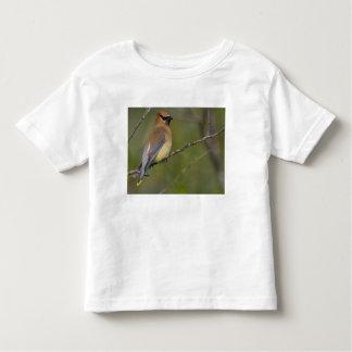 USA, Lake Sammamish, Washington. Cedar Waxwing Toddler T-Shirt