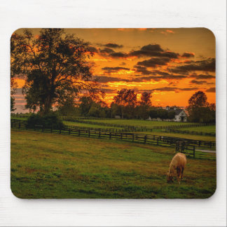 USA, Lexington, Kentucky. Lone horse at sunset 1 Mouse Mat