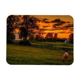 USA, Lexington, Kentucky. Lone horse at sunset 1 Rectangular Photo Magnet