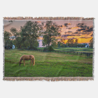 USA, Lexington, Kentucky. Lone horse at sunset 2