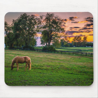 USA, Lexington, Kentucky. Lone horse at sunset 2 Mouse Mat