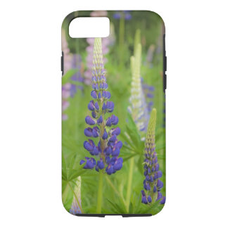 USA, Maine, Acadia National Park. Field of iPhone 8/7 Case