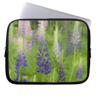 USA, Maine, Acadia National Park. Field of Laptop Computer Sleeves