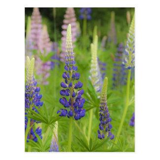 USA, Maine, Acadia National Park. Field of Postcard