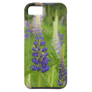 USA, Maine, Acadia National Park. Field of Tough iPhone 5 Case