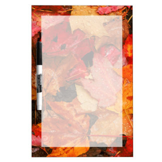 USA, Maine. Autumn maple leaves Dry Erase Board