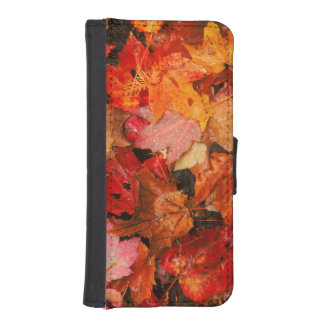 USA, Maine. Autumn maple leaves iPhone SE/5/5s Wallet Case