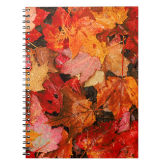 USA, Maine. Autumn maple leaves Notebook