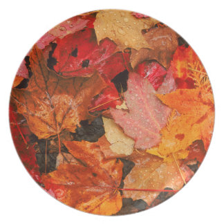 USA, Maine. Autumn maple leaves Plate