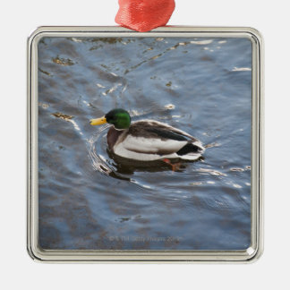 USA, Maine, Camden, Mallard Duck on lake Christmas Ornament