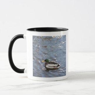 USA, Maine, Camden, Mallard Duck on lake Mug