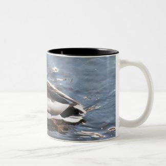 USA, Maine, Camden, Mallard Duck on lake Two-Tone Mug