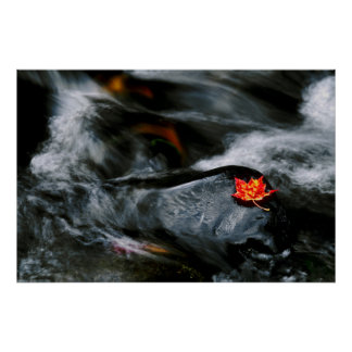 USA, Maine. Maple leaf on black rock in stream Poster