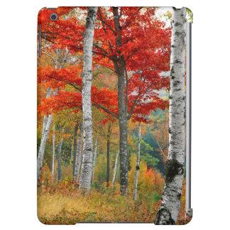 USA, Maine, Wyman Lake. Forest Of Birch iPad Air Cover