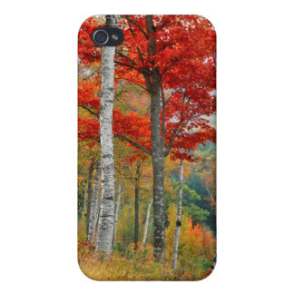 USA, Maine, Wyman Lake. Forest Of Birch iPhone 4/4S Cover