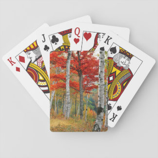 USA, Maine, Wyman Lake. Forest Of Birch Playing Cards