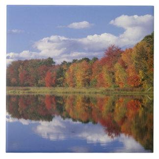 USA, Massachusetts, Acton. Reflection of autumn Tile