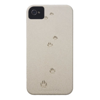USA, Massachusetts, dog's track on sand iPhone 4 Cases