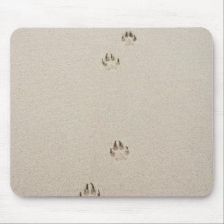 USA, Massachusetts, dog's track on sand Mouse Mat