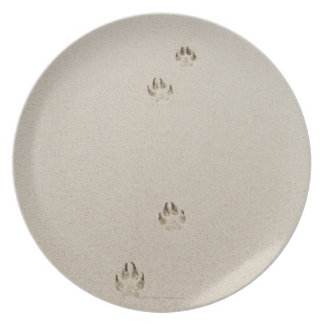 USA, Massachusetts, dog's track on sand Party Plate