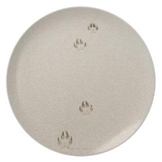 USA, Massachusetts, dog's track on sand Plate