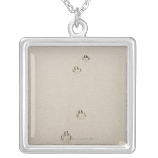 USA, Massachusetts, dog's track on sand Silver Plated Necklace