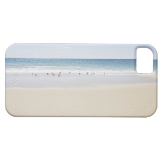 USA, Massachusetts, Empty beach 3 Barely There iPhone 5 Case