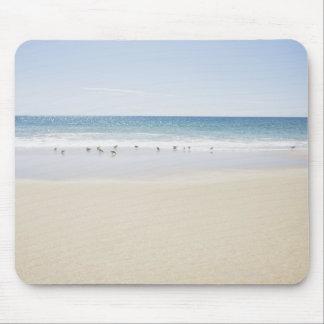 USA, Massachusetts, Empty beach 3 Mouse Mat