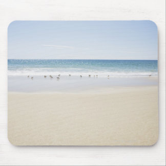 USA, Massachusetts, Empty beach 3 Mouse Pad