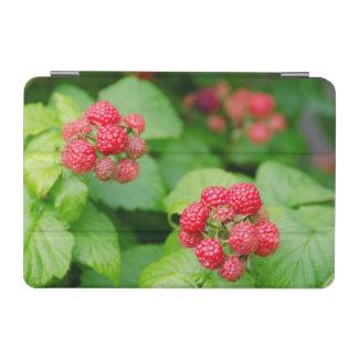 USA, Massachusetts, Nantucket. Ripe Raspberries iPad Mini Cover