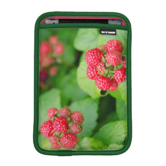 USA, Massachusetts, Nantucket. Ripe Raspberries iPad Mini Sleeve