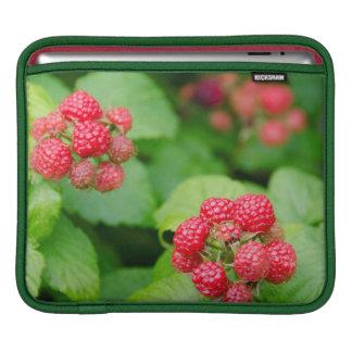 USA, Massachusetts, Nantucket. Ripe Raspberries iPad Sleeve